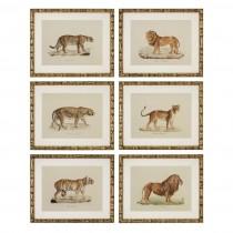Eichholtz Lion Tiger Jaguar Set of 6 Prints