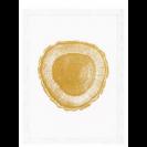 Gold Foil: Tree Rings Set of 4 Prints